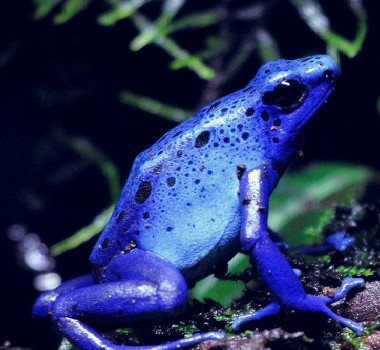 Beuvry se met en quatre pour accueillir les grenouilles bleues dans Ce blog - son auteur grenouille-bleue